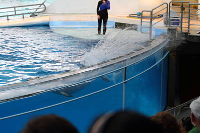 Sealife Photograph - Dolphin Show - National Aquarium In Baltimore Md - 1212135 by DC Photographer