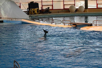Dolphins Photograph - Dolphin Show - National Aquarium In Baltimore Md - 1212142 by DC Photographer
