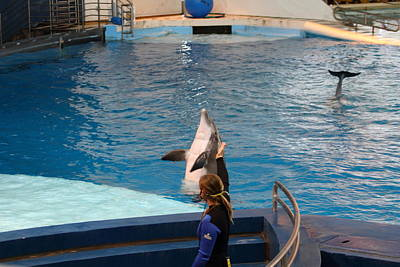 Dolphin Show - National Aquarium In Baltimore Md - 1212145 Art Print by DC Photographer