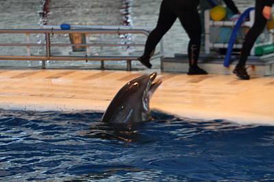Dolphin Show - National Aquarium In Baltimore Md - 1212150 Art Print