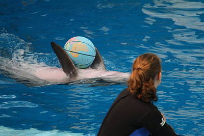 Dolphin Show - National Aquarium In Baltimore Md - 1212156 Art Print