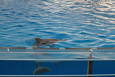 Baltimore Photograph - Dolphin Show - National Aquarium In Baltimore Md - 121216 by DC Photographer