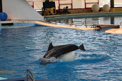 Dolphin Show - National Aquarium In Baltimore Md - 1212163 Art Print by DC Photographer