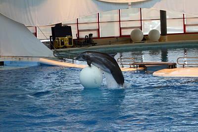 Dolphin Show - National Aquarium In Baltimore Md - 1212169 Art Print