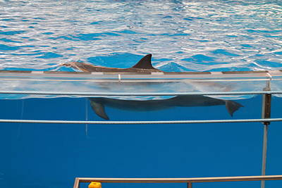 Baltimore Photograph - Dolphin Show - National Aquarium In Baltimore Md - 1212173 by DC Photographer
