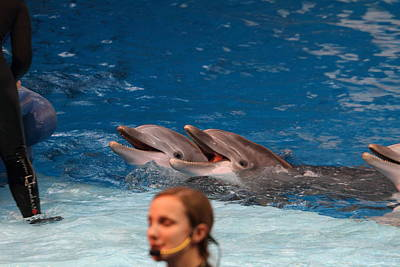Dolphin Show - National Aquarium In Baltimore Md - 1212176 Art Print by DC Photographer