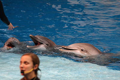 Dolphin Show - National Aquarium In Baltimore Md - 1212177 Art Print by DC Photographer