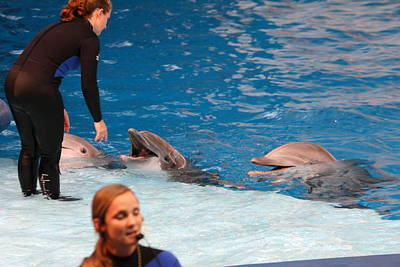 Dolphin Show - National Aquarium In Baltimore Md - 1212179 Art Print by DC Photographer