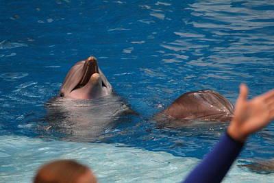 Dolphin Show - National Aquarium In Baltimore Md - 1212182 Art Print