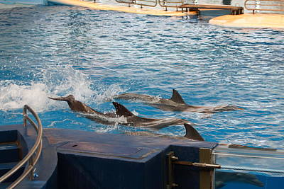 Dolphin Show - National Aquarium In Baltimore Md - 1212187 Art Print by DC Photographer