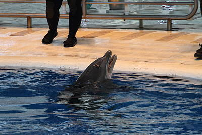 Dolphin Show - National Aquarium In Baltimore Md - 1212189 Art Print