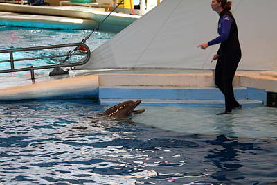 Dolphin Show - National Aquarium In Baltimore Md - 1212195 Art Print by DC Photographer