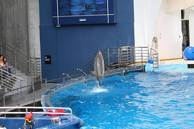 Dolphin Show - National Aquarium In Baltimore Md - 1212202 Art Print