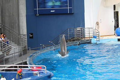 Dolphin Show - National Aquarium In Baltimore Md - 1212203 Art Print