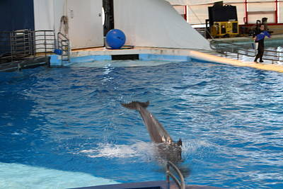 Landmarks Photograph - Dolphin Show - National Aquarium In Baltimore Md - 1212208 by DC Photographer
