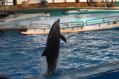 Dolphin Show - National Aquarium In Baltimore Md - 1212209 Art Print by DC Photographer