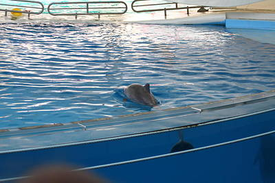 Dolphin Show - National Aquarium In Baltimore Md - 121221 Art Print by DC Photographer