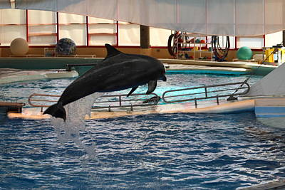 Dolphin Show - National Aquarium In Baltimore Md - 1212213 Art Print by DC Photographer