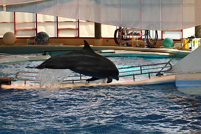 Dolphin Show - National Aquarium In Baltimore Md - 1212214 Art Print