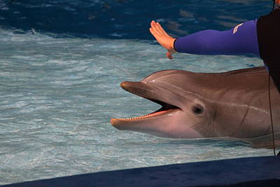 Dolphin Show - National Aquarium In Baltimore Md - 1212220 Art Print by DC Photographer