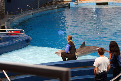 Dolphin Show - National Aquarium In Baltimore Md - 1212221 Art Print by DC Photographer