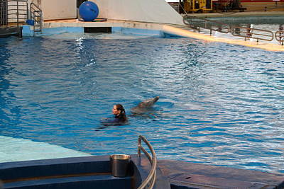 Md Photograph - Dolphin Show - National Aquarium In Baltimore Md - 1212225 by DC Photographer