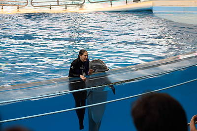 Dolphin Show - National Aquarium In Baltimore Md - 1212229 Art Print by DC Photographer