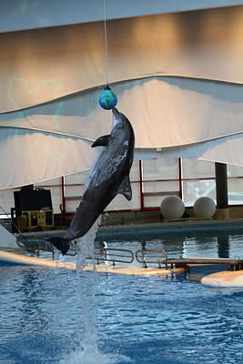 Dolphin Show - National Aquarium In Baltimore Md - 1212234 Art Print by DC Photographer