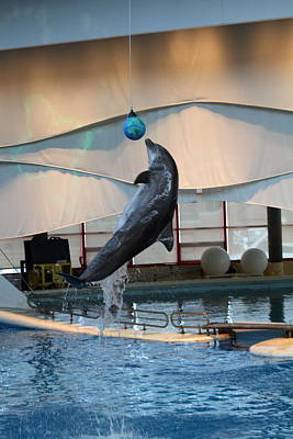 Dolphin Show - National Aquarium In Baltimore Md - 1212235 Art Print by DC Photographer
