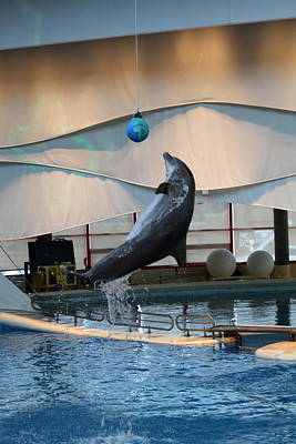Dolphin Show - National Aquarium In Baltimore Md - 1212236 Art Print by DC Photographer