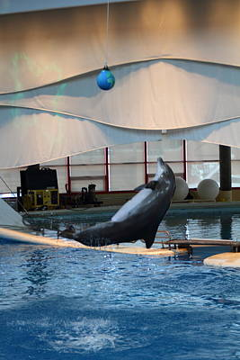 Dolphins Photograph - Dolphin Show - National Aquarium In Baltimore Md - 1212238 by DC Photographer