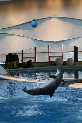 Dolphins Photograph - Dolphin Show - National Aquarium In Baltimore Md - 1212239 by DC Photographer