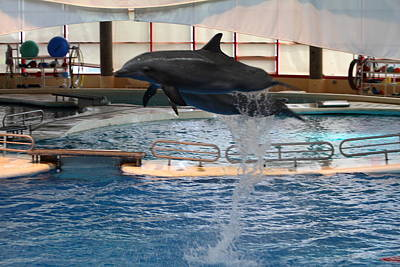 Dolphin Show - National Aquarium In Baltimore Md - 1212249 Art Print by DC Photographer
