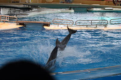 Dolphin Show - National Aquarium In Baltimore Md - 1212254 Print by DC Photographer