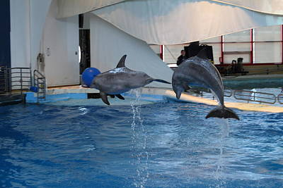Dolphin Show - National Aquarium In Baltimore Md - 1212258 Art Print by DC Photographer