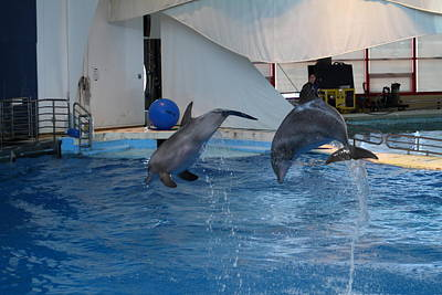 Show Photograph - Dolphin Show - National Aquarium In Baltimore Md - 1212259 by DC Photographer