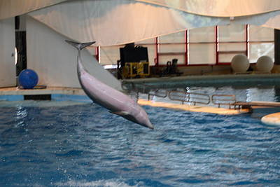 Fish Photograph - Dolphin Show - National Aquarium In Baltimore Md - 1212267 by DC Photographer