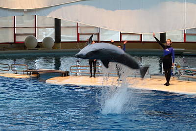 Md Photograph - Dolphin Show - National Aquarium In Baltimore Md - 1212271 by DC Photographer