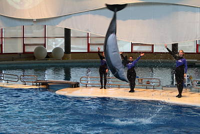 Dolphin Show - National Aquarium In Baltimore Md - 1212274 Art Print