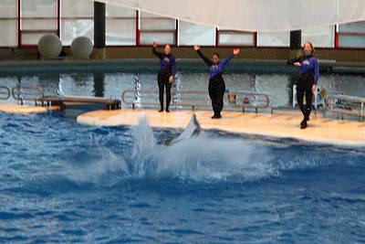 Dolphin Show - National Aquarium In Baltimore Md - 1212278 Art Print