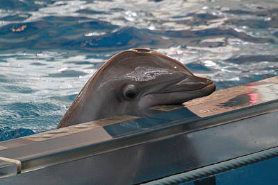 Harbor Photograph - Dolphin Show - National Aquarium In Baltimore Md - 1212279 by DC Photographer