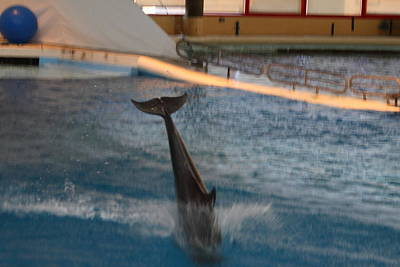 Dolphin Show - National Aquarium In Baltimore Md - 121230 Art Print by DC Photographer