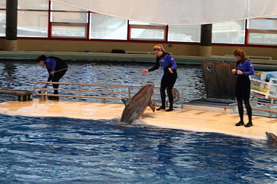 Dolphin Show - National Aquarium In Baltimore Md - 121231 Art Print by DC Photographer