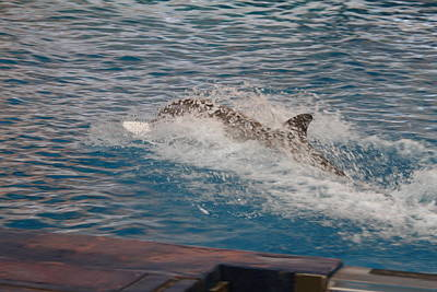 Dolphin Show - National Aquarium In Baltimore Md - 121251 Art Print by DC Photographer