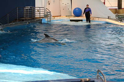 Dolphin Show - National Aquarium In Baltimore Md - 121252 Art Print by DC Photographer