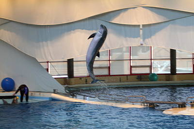 Dolphin Show - National Aquarium In Baltimore Md - 121254 Art Print by DC Photographer