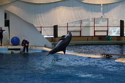 Dolphin Show - National Aquarium In Baltimore Md - 121257 Art Print by DC Photographer