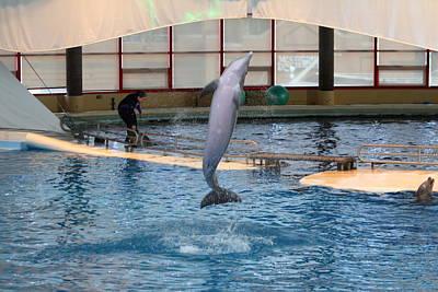 Dolphin Show - National Aquarium In Baltimore Md - 121264 Art Print