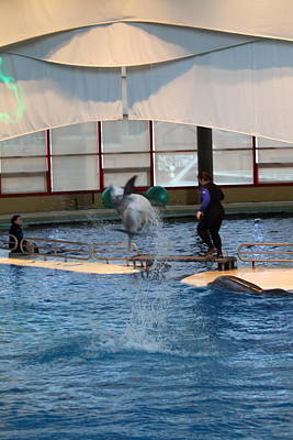 Dolphin Show - National Aquarium In Baltimore Md - 121267 Art Print by DC Photographer