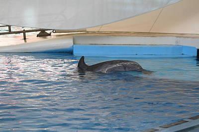 Dolphin Show - National Aquarium In Baltimore Md - 12128 Art Print